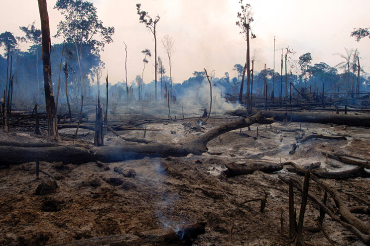 the destruction of rain forests is a problem that the world cannot continue to ignore As the world rainforest movement points out, the issue of rainforest destruction is now recognised as one of the greatest environmental threats -- and tragedies -- of all time (world rainforest movement 1992.