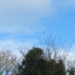 Police Helicopter Hovering Over Upton Camp During Eviction Attempt