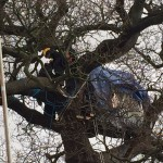 Climbing Team Trying To Remove Person From Treehouse
